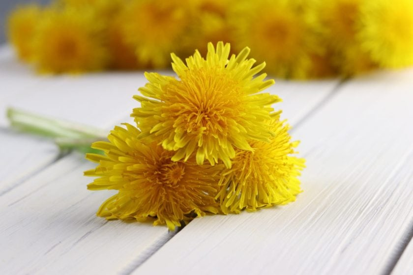 Dandelion: A Super food?