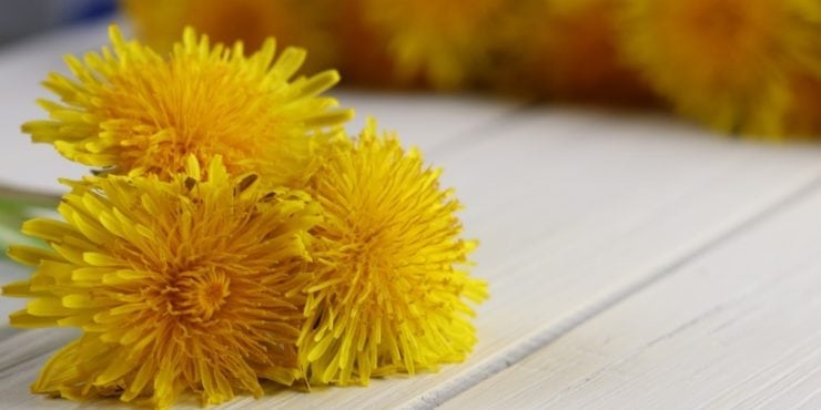 Dandelion: The superfood growing in your yard