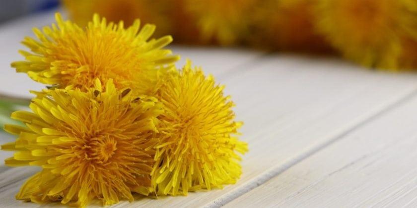Dandelion: A Super Food?