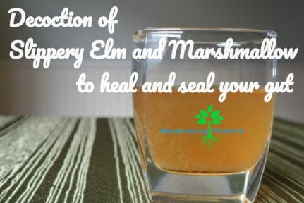 Decoction of Slippery Elm Bark and Marshmallow Root