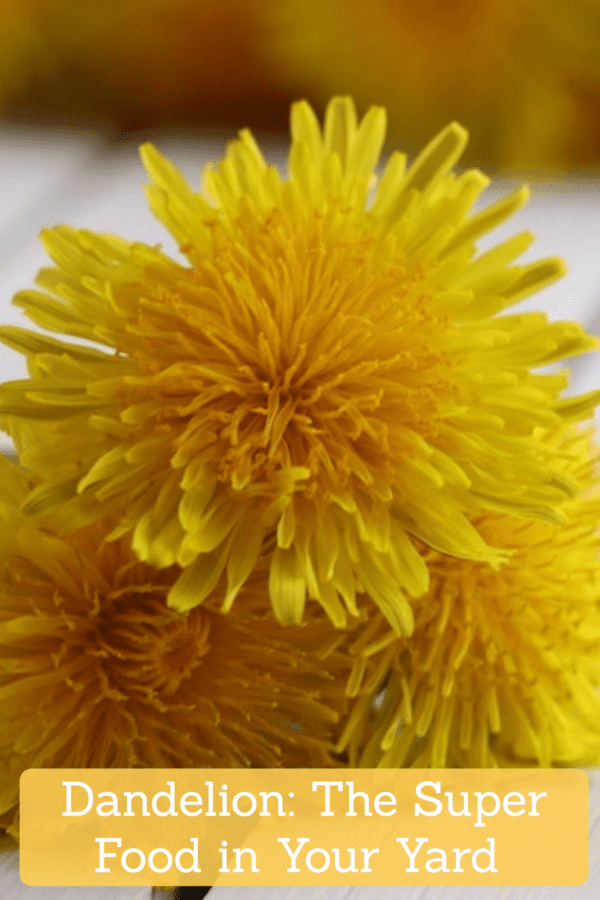 Dandelion: The Super Food Growing in Your Yard