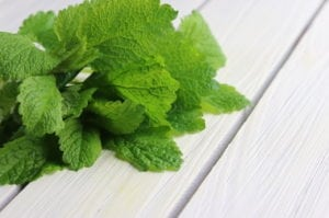 Lemon Balm Bunch