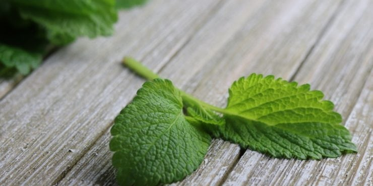 Lemon Balm: Calms anxiety, encourages restful sleep, fights viruses and more! #herbs #herbalremedies #naturalremedies #reclaimingvitality.com