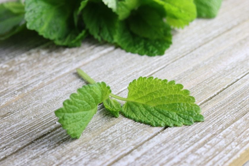 Lemon Balm: Calms anxiety, encourages restful sleep, fights viruses, and more!