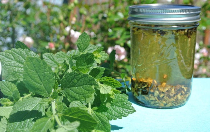 Homemade Tinctures: How and Why to Make them